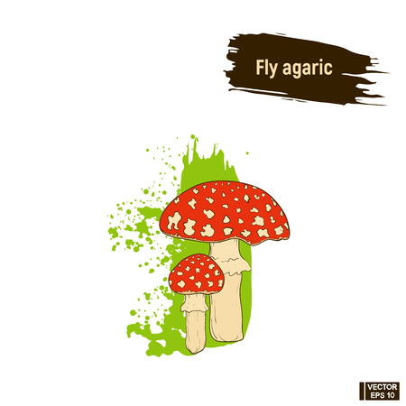 A vector image of colored mushrooms. Fly agaric hand drawing sketch, imitation of ink