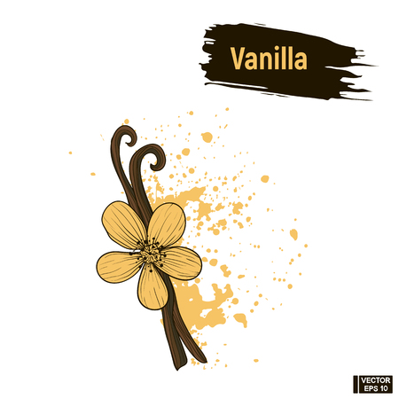 Vector image. Sketch flower and sticks vanilla, imitation of ink, blots and splashes.  イラスト・ベクター素材