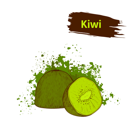 Colors drawing kiwi on a background green splots. Set, fruit of ripe kiwi, slices and sectional view.