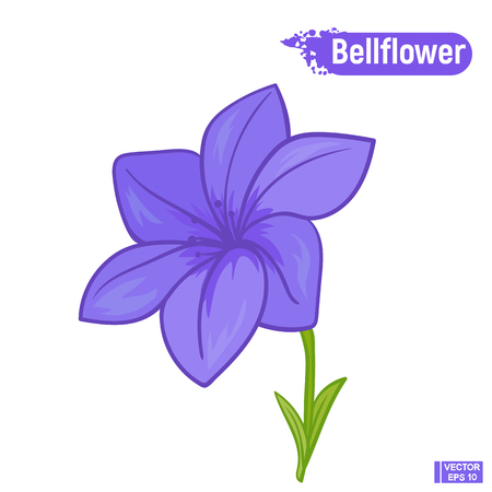 Vector image. Blue bell flower. Colorful sketch of a blossoming flower
