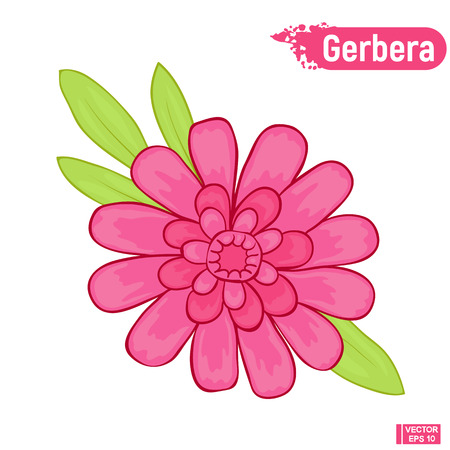Vector image. Blooming gerbera. Isolated picture of an pink gerbera on a white background.