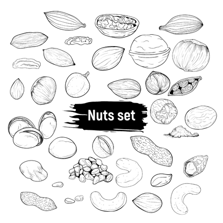 A big set of nuts in the style of doodle. Forest nuts line drawing.
