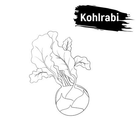 Vegetarian cuisine. Black and white sketch of kohlrabi outline. Useful vegetables, imitation of ink