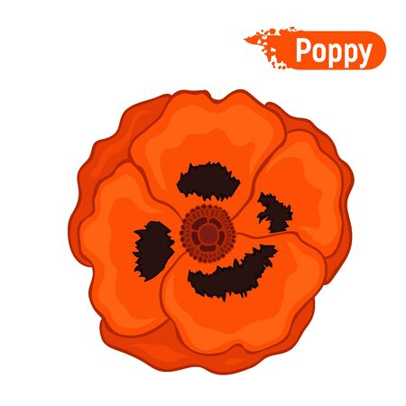 A blossoming red poppy flower. Day of Memory Symbol