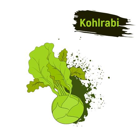 Vegetarian cuisine. Colored sketch of green kohlrabi. Useful vegetables, imitation of ink splashes and blots