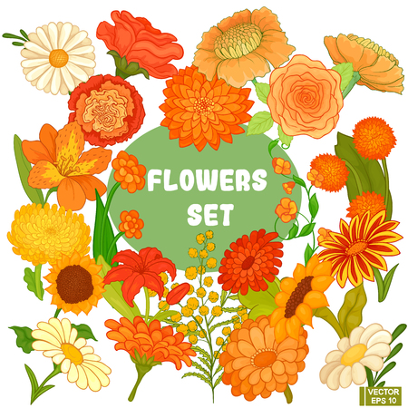 A set of various flowers of orange and yellow colors. Isolated over white background.