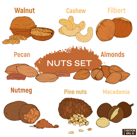Beautiful colored hand-drawn nuts vector illustration set