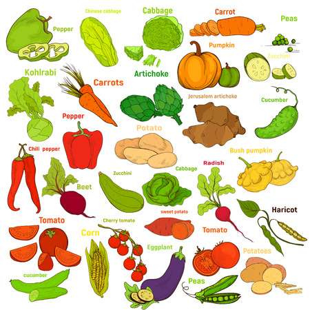 A big set of vegetable. Bright ripe hand-drawing vegetable , isolated on white background. Banque d'images - 115600850