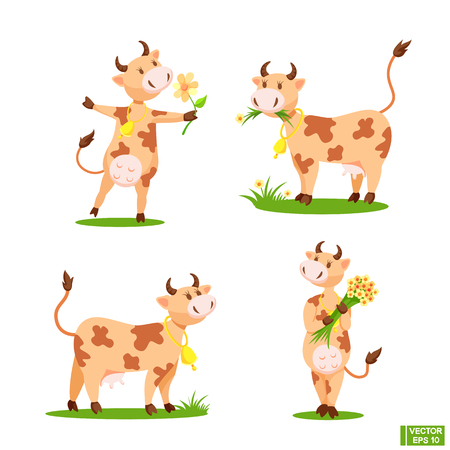 Vector image. A set of cute cow grazing in a meadow, holding a bouquet with daisies, eating grass. Cartoon character cheerful cow. Illustration