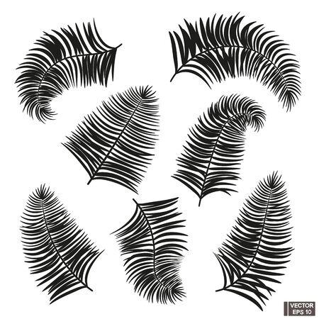 Set di foglie di palma da cocco contorno nero. Vettoriali