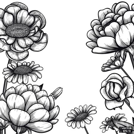 Vector illustration. Sketch floral hand drawn botany. Black and white with line art on white backgrounds.