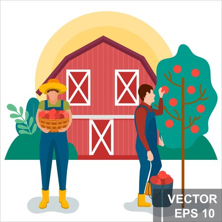Farmer. Harvesting. Apples For your design. Modern flat style. Ilustração