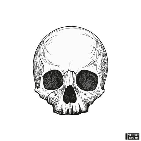 Vector illustration. Hand drawn anatomy human skull engraved style. Vintage halloween illustration. Skull without lower jaw. Illustration