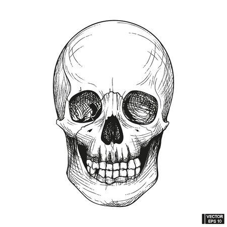 Vector illustration. Hand drawn anatomy human skull engraved style. Vintage halloween illustration. Skull with lower jaw