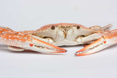 one crab on white background