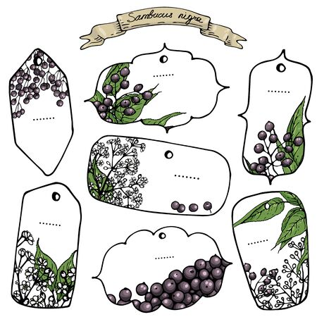 Vector illustration of isolated vintage  hand-drawn elderberry labels Illustration