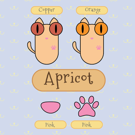 distinguish: Infographic show detail of apricot color cat, eye color, nose color and foot color.