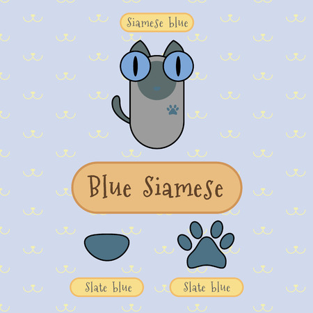 siamese cat: Infographic show detail of blue siamese cat, eye color, nose color and foot color. Illustration