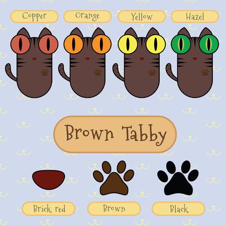 ojo de gato: Infograf�a espect�culo detalle del gato de tabby marr�n, color de ojos, color de la nariz y el color del pie.