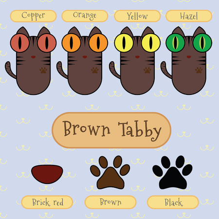 tabby cat: Infographic show detail of brown tabby cat, eye color, nose color and foot color.