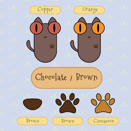 cat eye: Infographic show detail of chocolatebrown color cat, eye color, nose color and foot color.