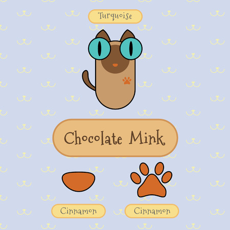 mink: Infographic show detail of chocolate mink cat, eye color, nose color and foot color.