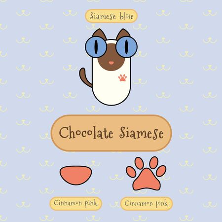 siamese cat: Infographic show detail of chocolate siamese cat, eye color, nose color and foot color.