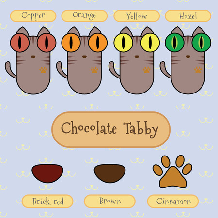 digest: Infographic show detail of chocolate tabby cat, eye color, nose color and foot color. Illustration