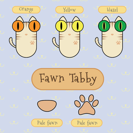 differentiate: Infographic show detail of fawn tabby cat, eye color, nose color and foot color. Illustration