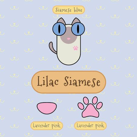 siamese cat: Infographic show detail of lilac siamese cat, eye color, nose color and foot color. Illustration
