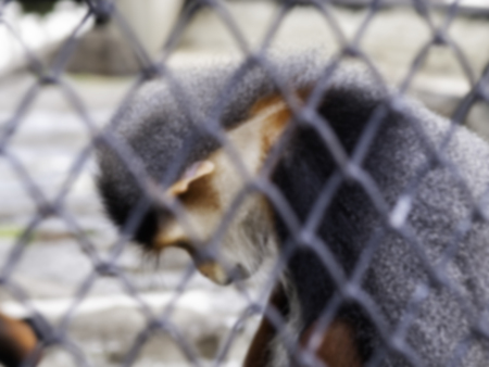 uncomfortable: Blured monkey in cage. feeling sad and uncomfortable.