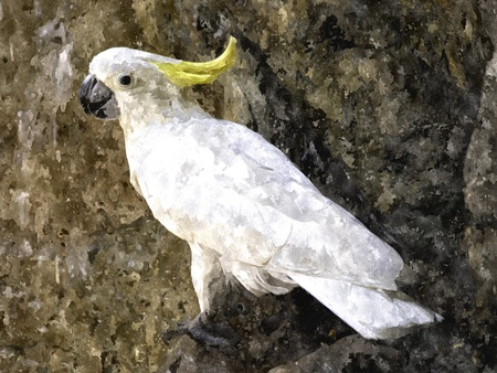 cockatoo: Single cockatoo on rock background. selective focus on cockatoo.Watercolor illustration created by computer. Stock Photo
