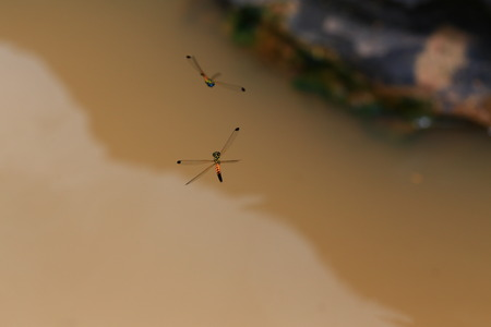 dragon fly: dragon fly on water Stock Photo