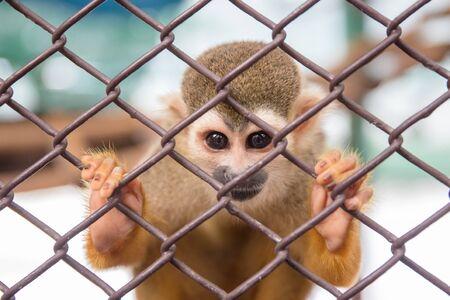Squirrel Monkey in zoo
