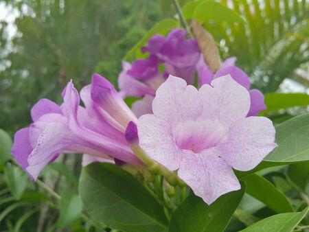 colour: Purple Flower color