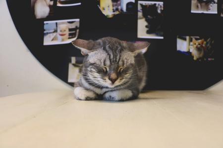 kitty cat: Lazy Day Stock Photo