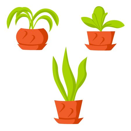 Vector drawing green indoor flowers in pots on a white isolated background Stock fotó - 137890911