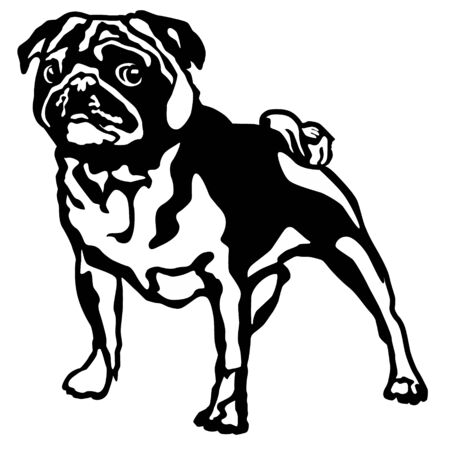 vector drawing of a dog pug in profile, a cliche for cutting on a white isolated background Illustration