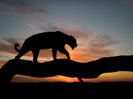 Silhouette of leopard on tree over sunset Stock Photo - 1470928