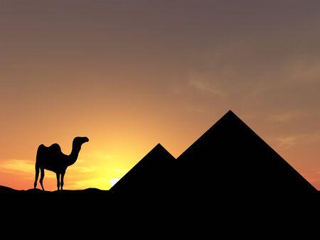 Camel near pyramid photo