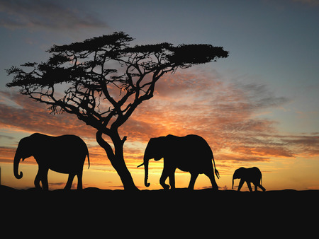 africa sunset: Gruppo di elefanti in Africa  Archivio Fotografico