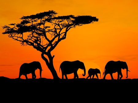 acacia tree: Group of elephant in africa