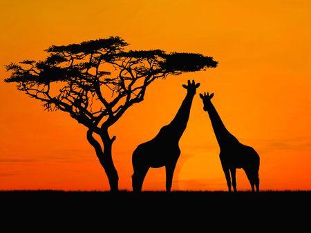 Two girafes over sunrise near acacia Stock Photo