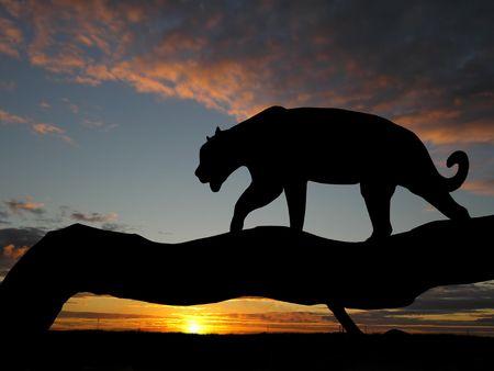 black jaguar: Silhouette of leopard on tree over sunset Stock Photo