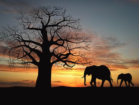 baobab: Group of elephant in africa