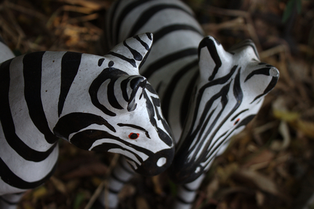 confide: zebra models in a brown surrounding Stock Photo
