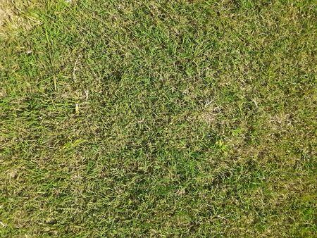 green grass in a garden Stok Fotoğraf