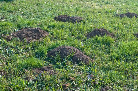 moles: Holes in the ground used by moles,italy Stock Photo