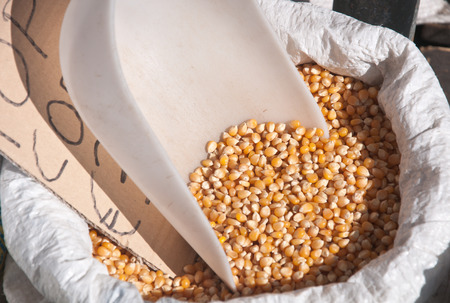 plastic scoop: Bag containing corn kernels with relative plastic scoop,italy