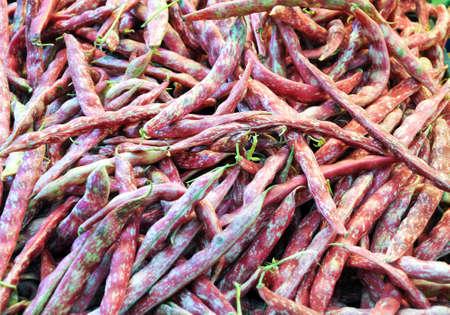 borlotti beans: Group of borlotti beans ready to be cooked,italy Stock Photo